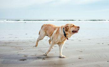 assicurazioni per cani