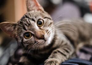 polizza assicurativa gatto